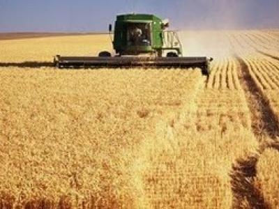 Por falta de infraestrutura, 5 milhões de toneladas de grãos são desperdiçadas por ano no Brasil
